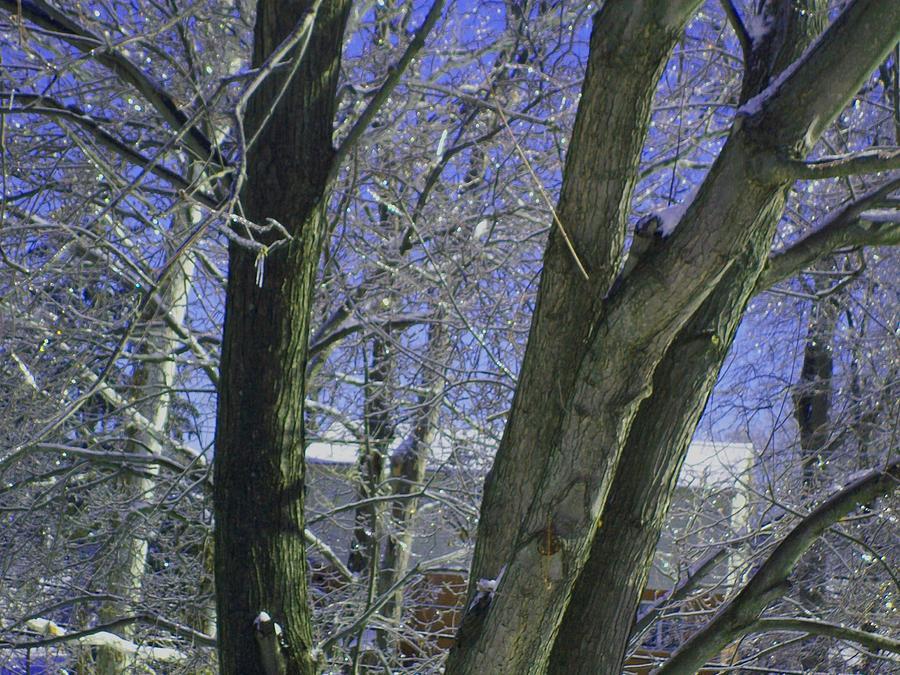 Tree Photograph - Winter Trees by Misty VanPool