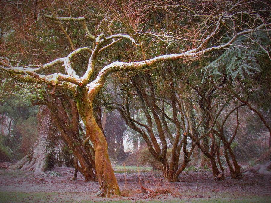 Winter Photograph - Winter Trees by Paula OSullivan