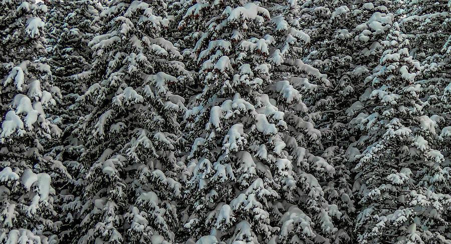 Winter Trees by Richard Cheski