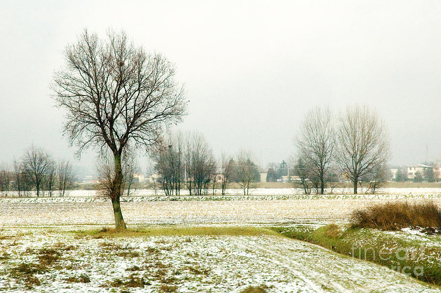 Bare Photograph - Winter Trees by Silvia Ganora