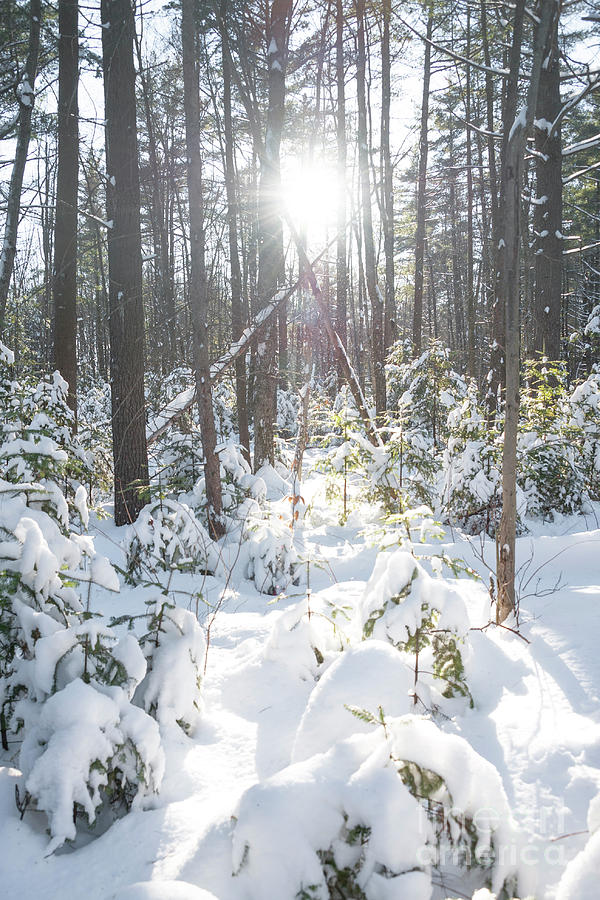Winter Photograph - Winter Under The Sun by Audrey Wilkie
