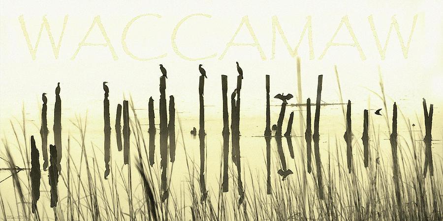 Winter Waccamaw Mist by Deborah Smith