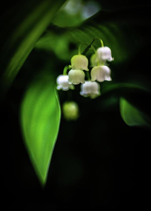 Shade Blossoms by Pamela Taylor
