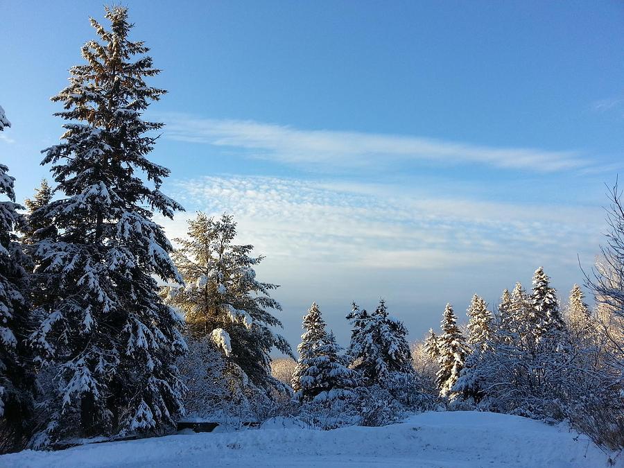 Winter Wonder  Photograph by Natalie Barrow