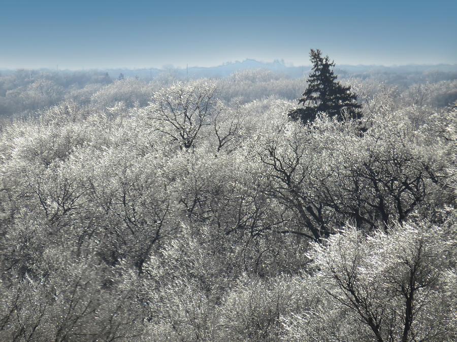 Winter Wonderland by Carolyn Fletcher