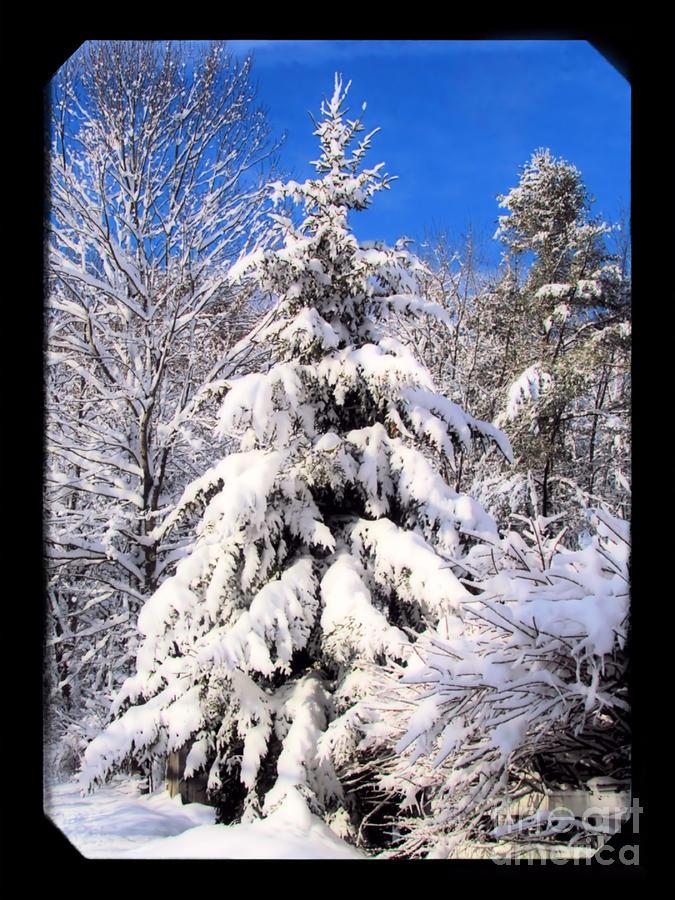 Snow Photograph - Winter Wonderland by Elizabeth Dow