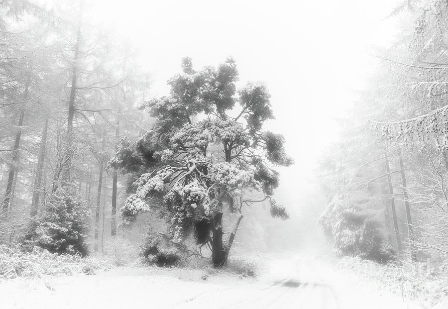 Winter Wonderland by Janet Burdon