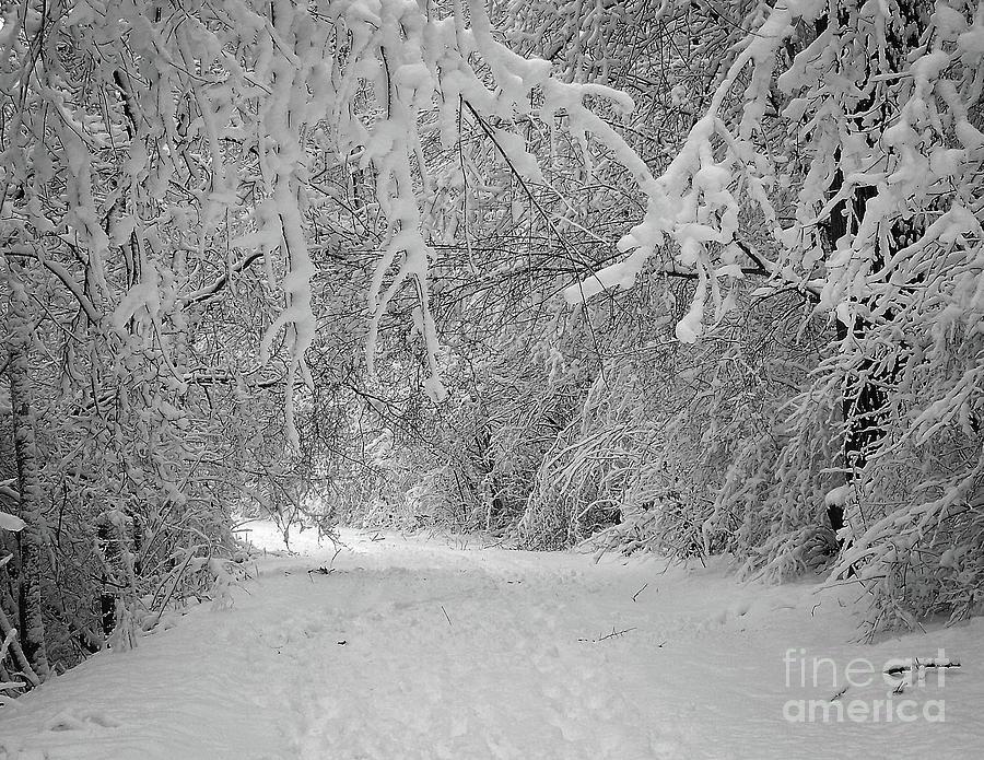 Winter Wonderland Photograph by Phil Perkins