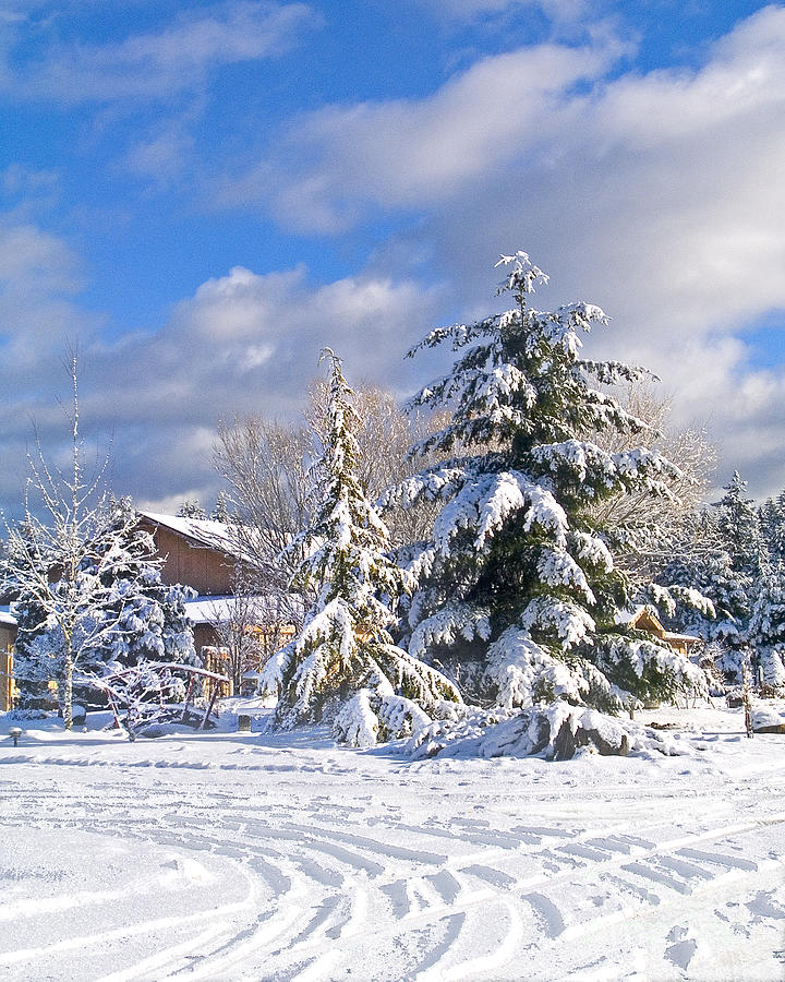 Winter Photograph - Winter Wonderland by Wilbur Young