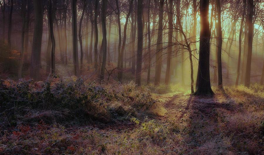 Winter Woods Photograph