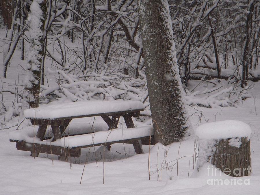 Winter woods Photograph by Deborah Finley