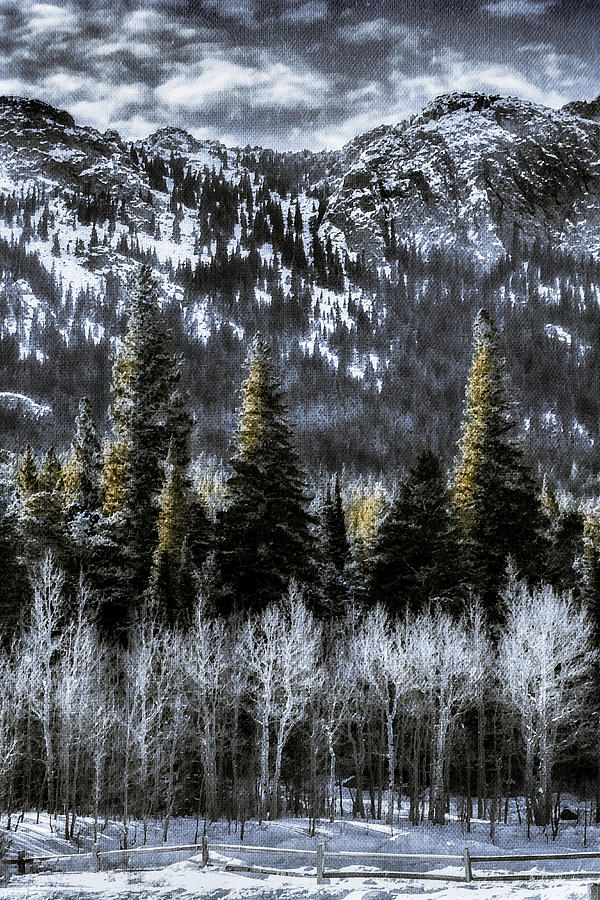 Winter Scenes Photograph - Winter Woods by Garett Gabriel