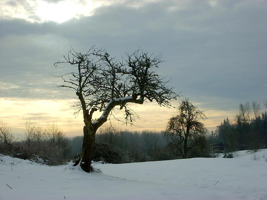 Winter Photograph - Wintergloom by Barbara  White