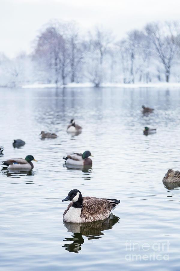 Winterlong Photograph