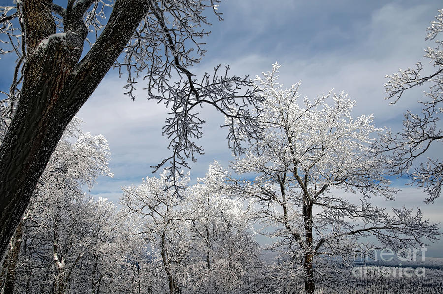 Winter Photograph - Winters Arrival by Lois Bryan