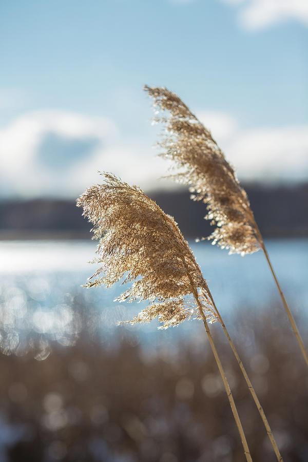 Winter's Breeze by Sara Hudock