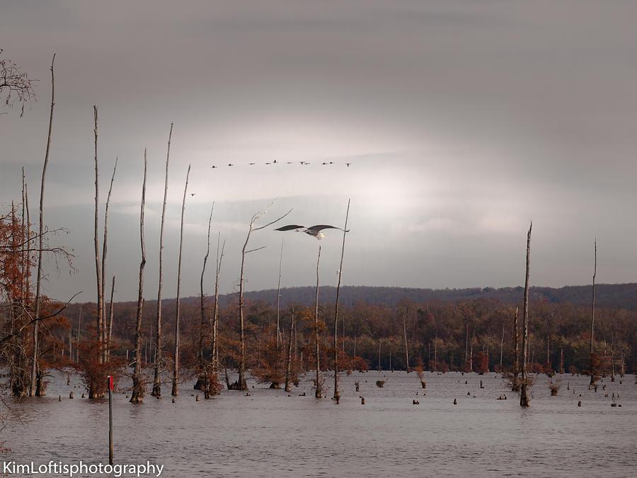 Heron Photograph - Winters Coming  by Kim Loftis
