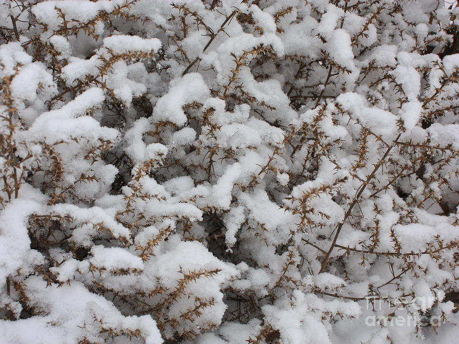 Snow Photograph - Winters Contrast by Carol Groenen