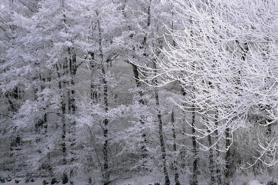 Winter Photograph - Winters Down by Bruce Thompson