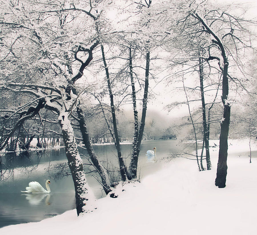 Winter Photograph - Winters Grace by Jessica Jenney