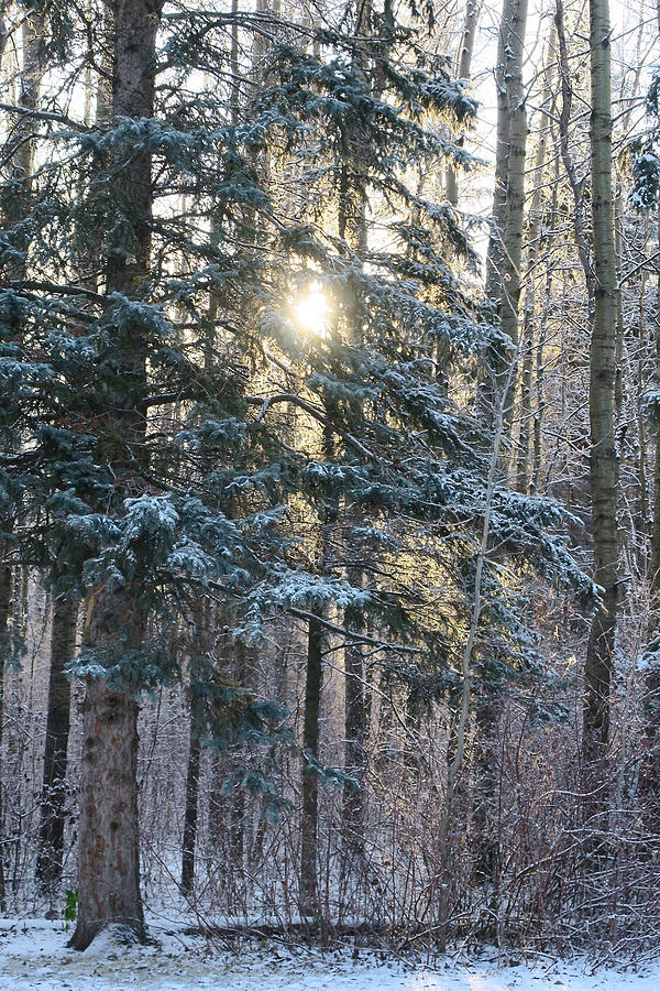Woodland Photograph - Winters Midday Light by Earth Garden Art