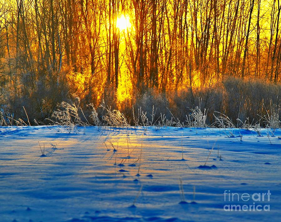 Sunshine Photograph - Winters Morning by Robert Pearson