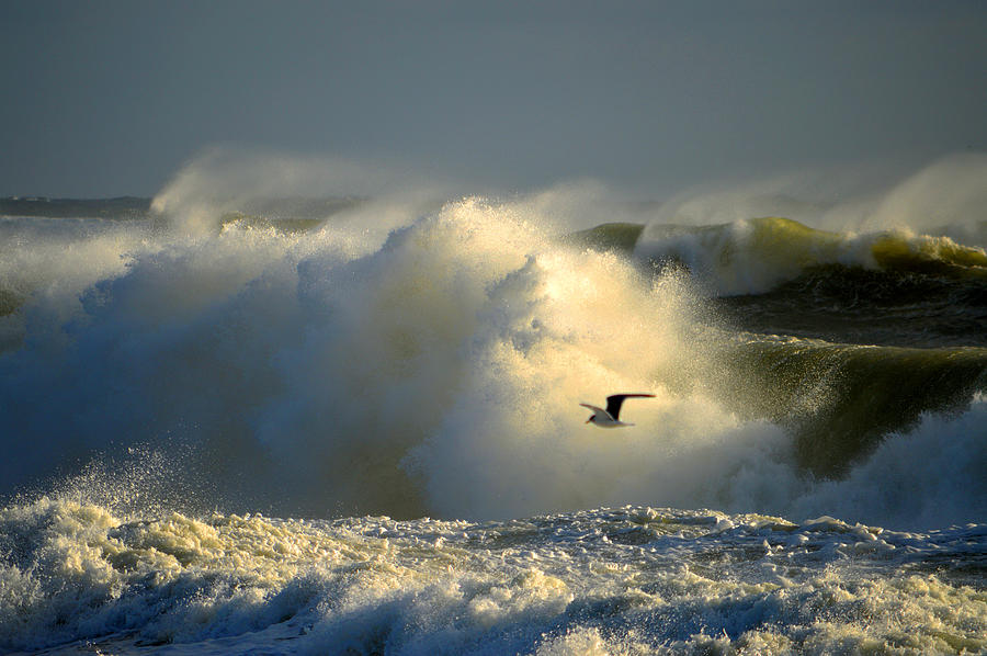 Ocean Photograph - Winters Passing by Dianne Cowen