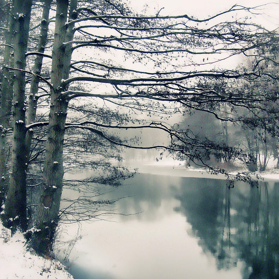 Nature Photograph - Winters Reach by Jessica Jenney