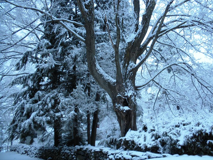 Winters Touch Photograph by Karen Moulder