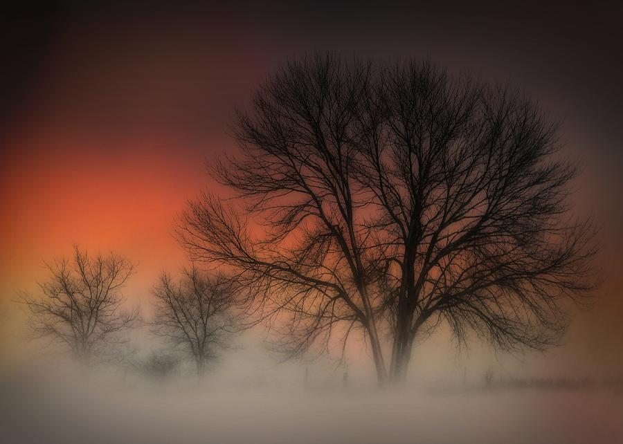 Winter's Warm Embrace by David Kuhn