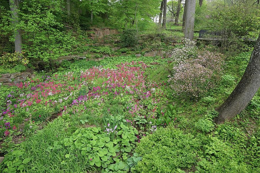 Winterthur Gardens #5435 by Raymond Magnani