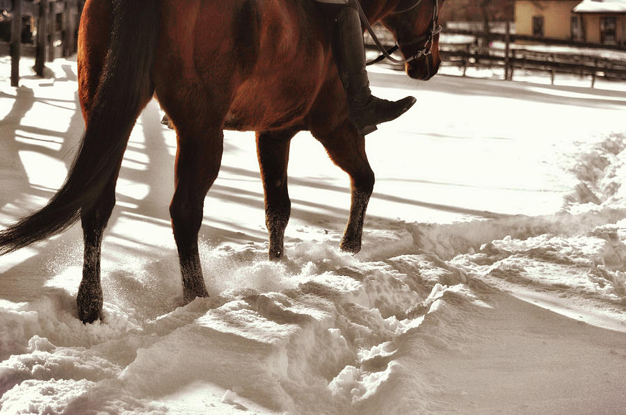 Merry Photograph - Wintertime Hack by JAMART Photography