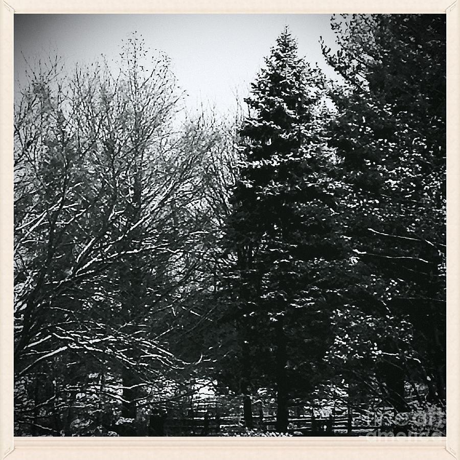 Wintery Woods Photograph