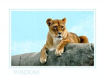 Lion Photograph - Wisdom by Kelly  Kane