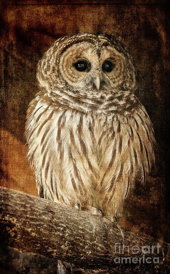 Owl Photograph - Wisdom by Lois Bryan