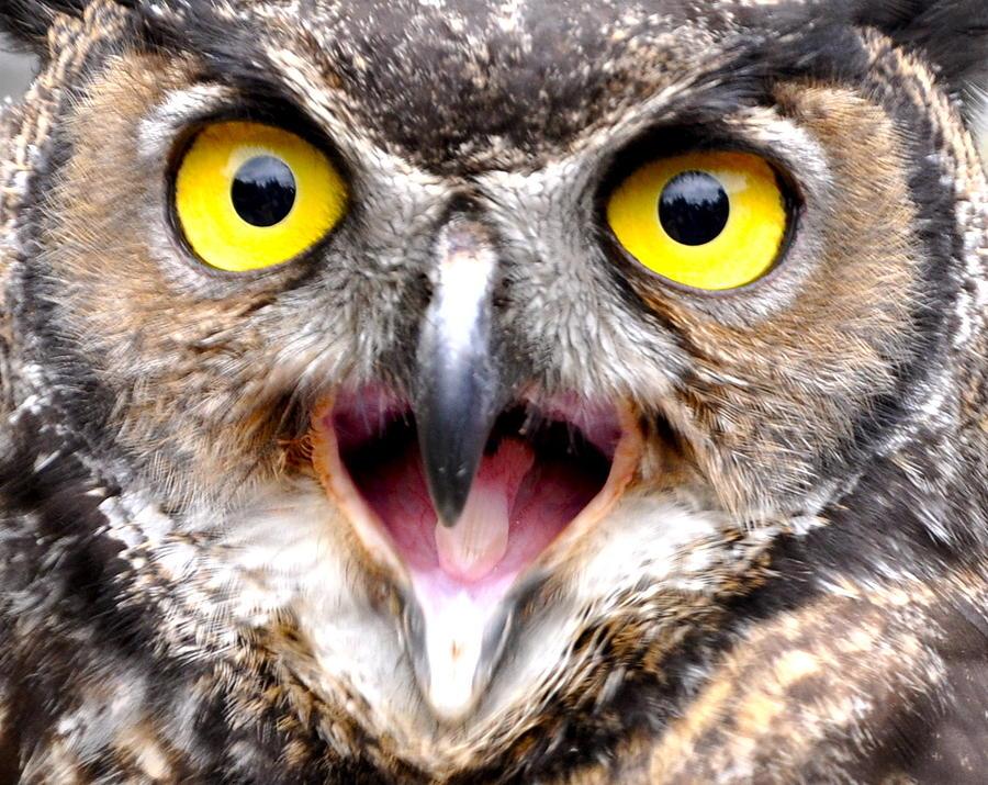 Owl Photograph - Wise Mr. Owl by Caroline Reyes-Loughrey