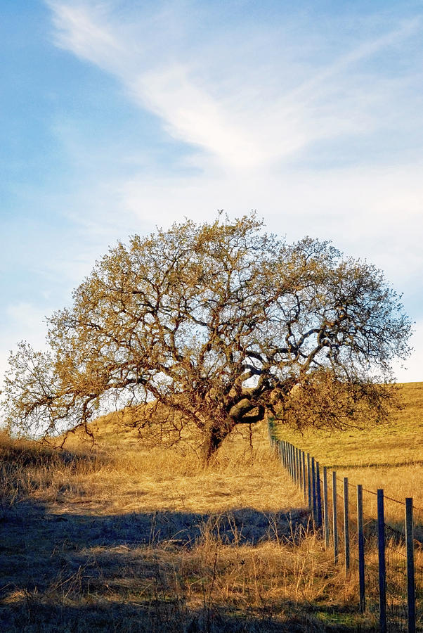 Tree Photograph - Wise Old Tree by Aron Kearney