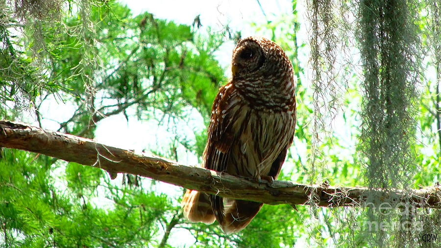 Owl Photograph - Wise Owl by Gina Welch
