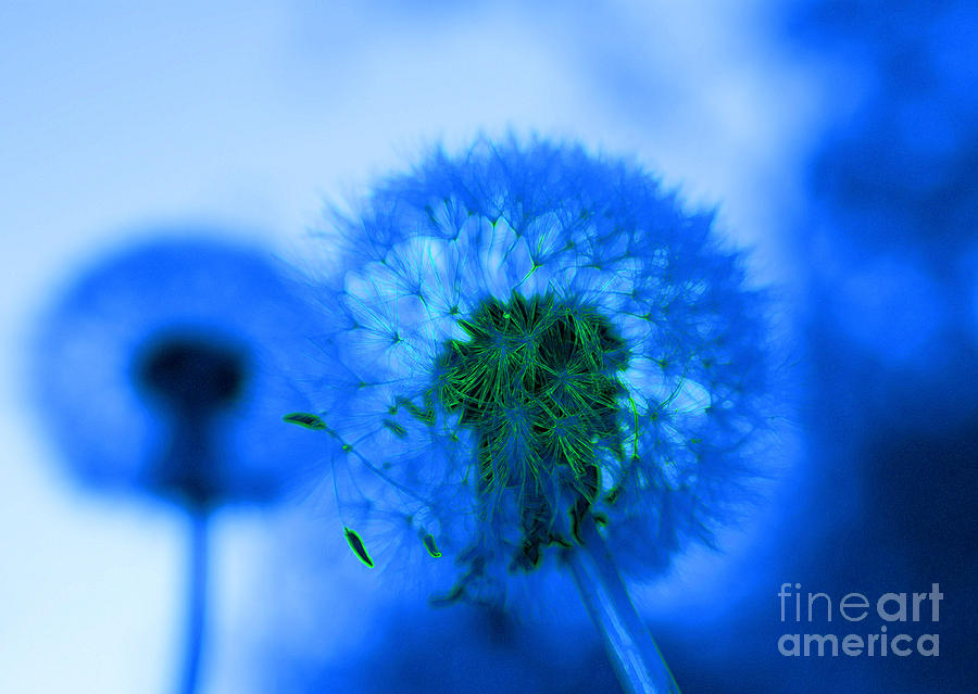 Dandelion Photograph - Wish Away The Blues by Valerie Fuqua