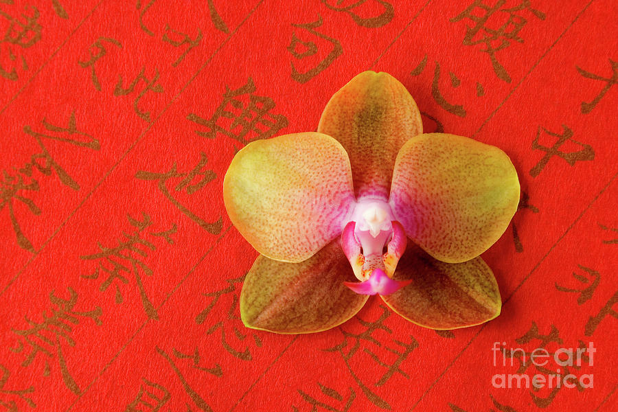 Orchid Photograph - Wishes Come True by Julia Hiebaum