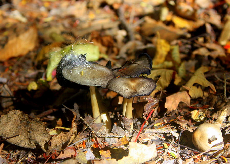 Mushroom Photograph - Wishy Mushrooms by Amanda McKenney