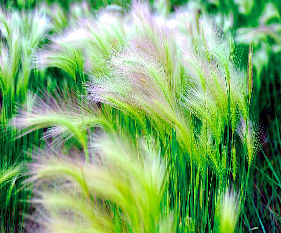 Green Photograph - Wispy Green by Richard Gehlbach