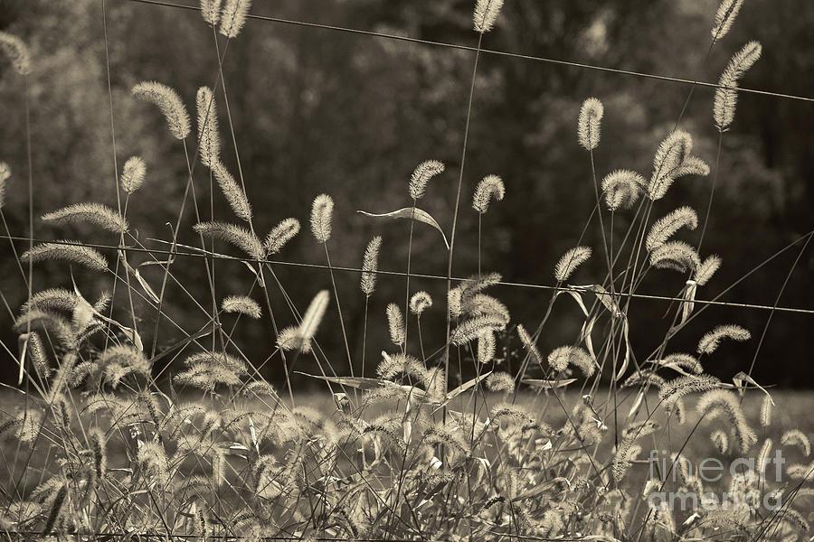 Wispy by Joanne Coyle
