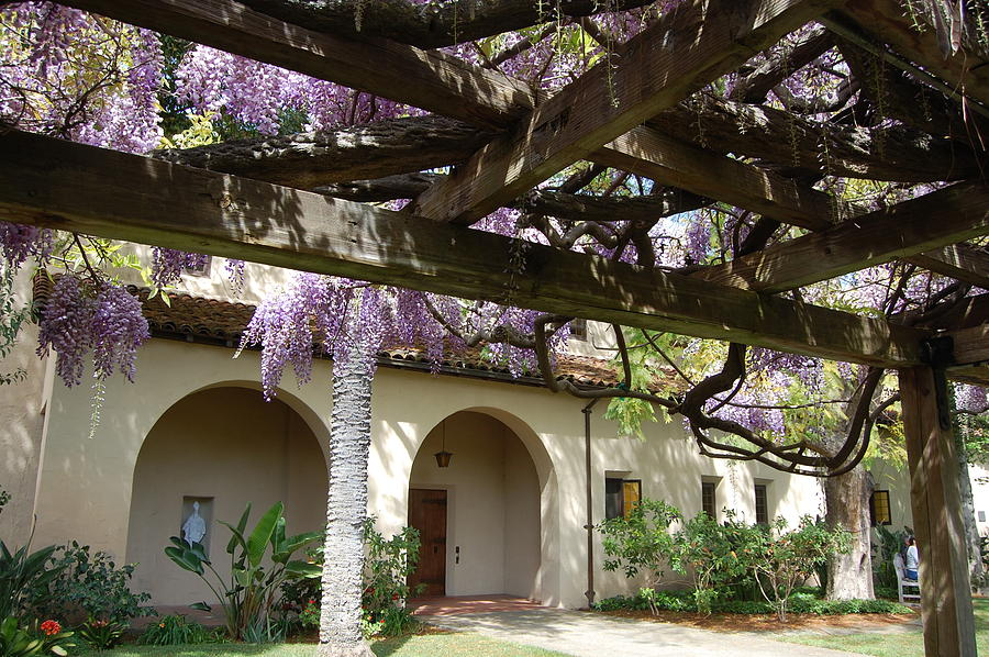 Wisteria Arbor Photograph By Carolyn Donnell