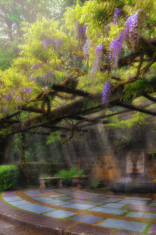 Garden Photograph - Wisteria Flowers Blooming On Trellis Over Water Fountain by David Gn