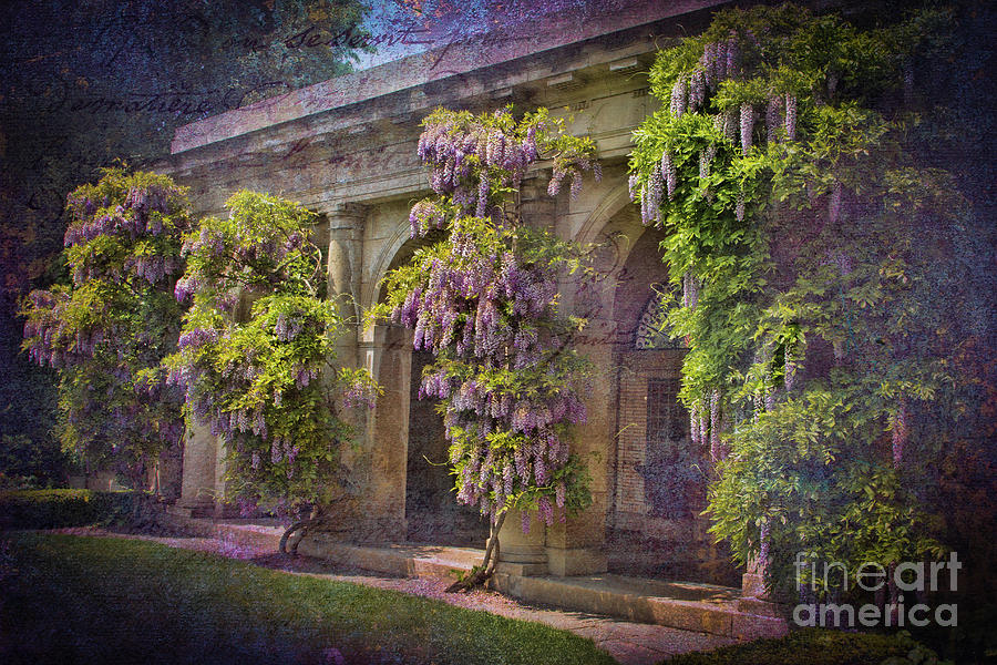 Wisteria Garden Waltz Photograph by Marilyn Cornwell