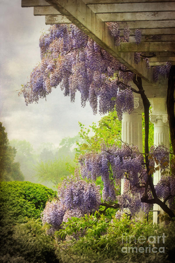 Wisteria Photograph - Wisteria In A Spring Shower Two by Susan Isakson