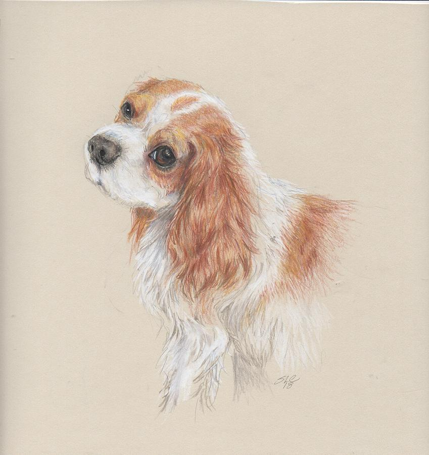 Cavalier Drawing - Wistful by Susan Coons