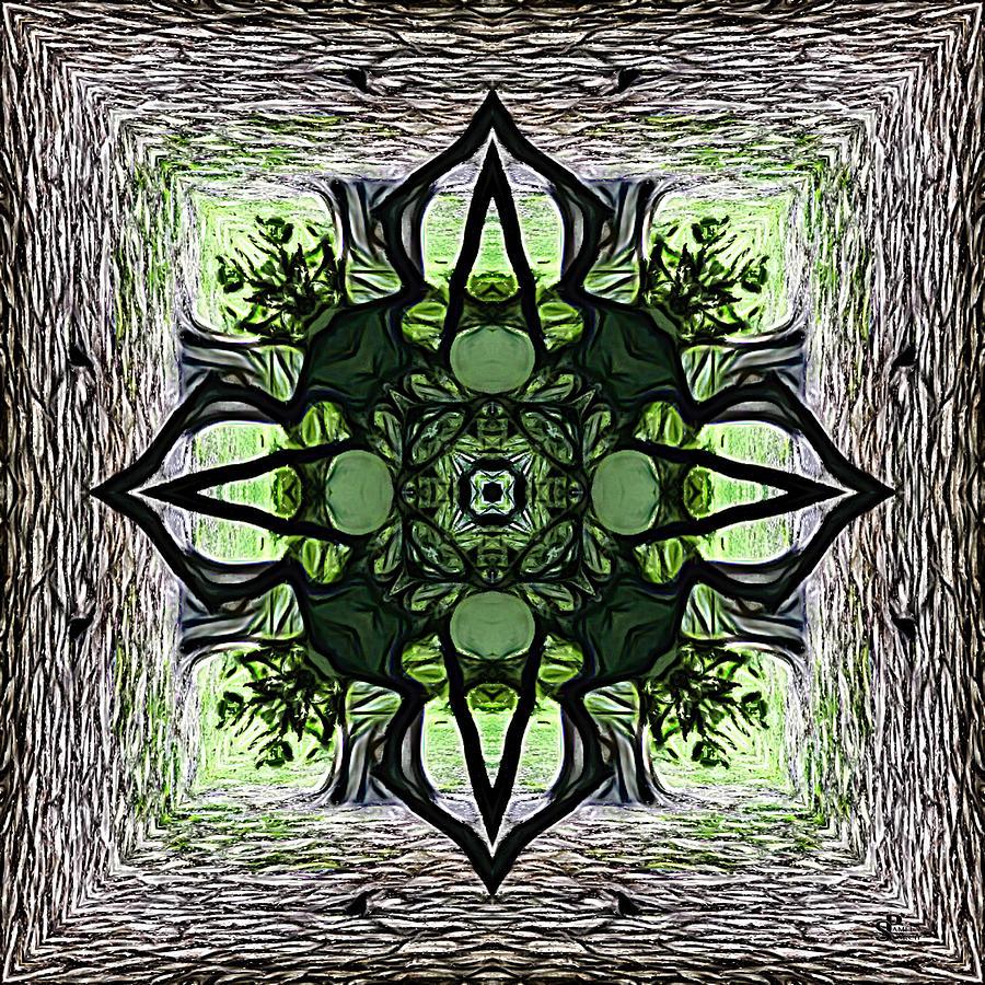Witch Hazel Bark Essence Digital Art By Pamela Storch