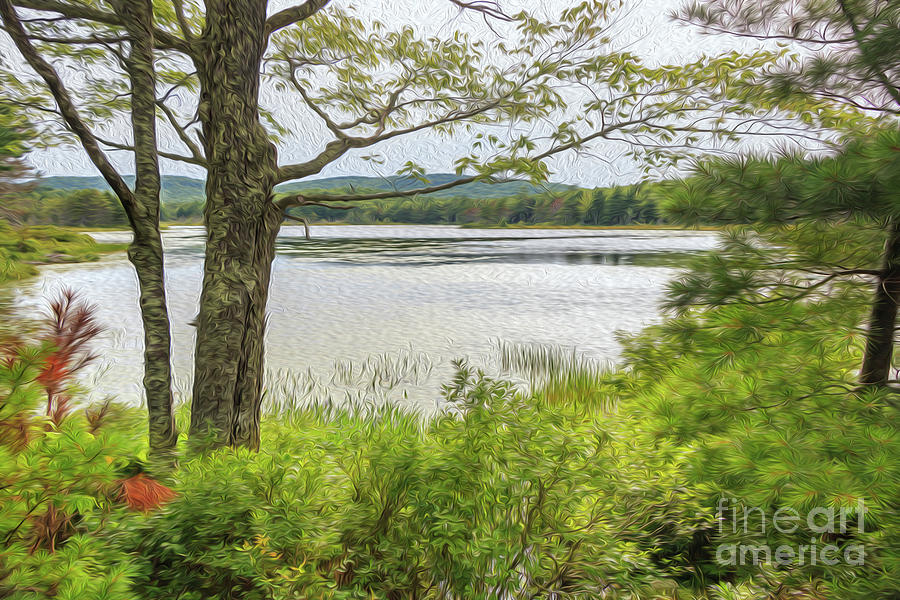 Witch Hole Pond Acadia National Park Photograph